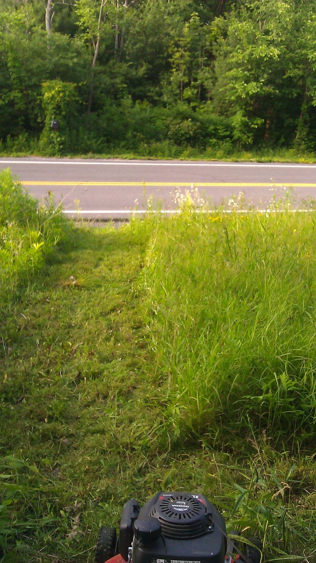 Long grass can lead to rodent and insect problems!