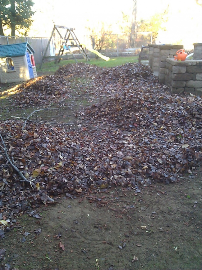 Enjoy the rest of fall and feel free to call Parkview Landscaping at 250-9495 for a free estimate!!!