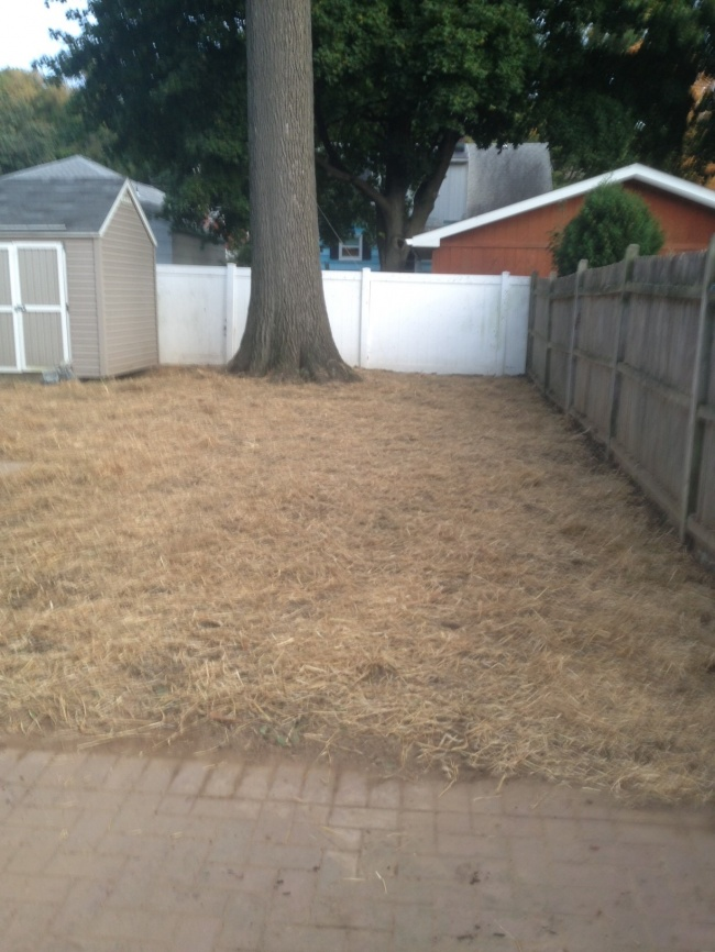 Establishing new lawns, dethatching and aerating