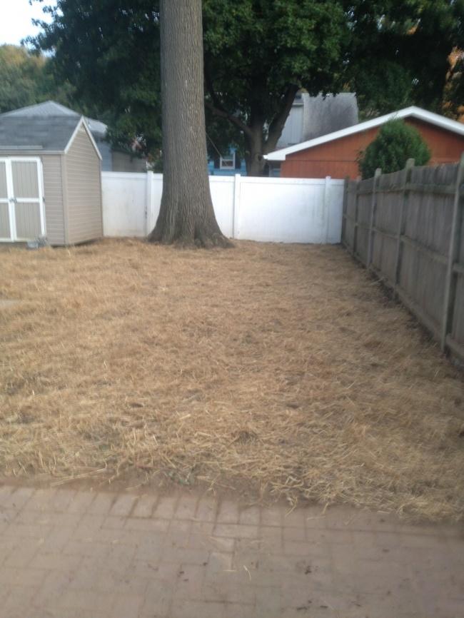 Establishing new lawns, dethatching and aerating
