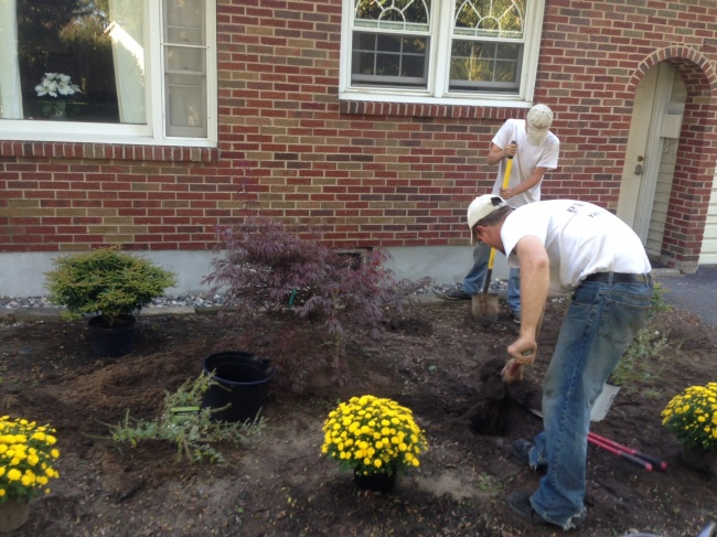 Planting and shrub delivery